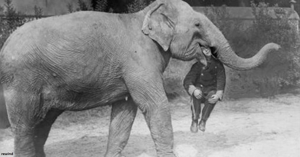 33 жутких фото из цирков прошлого, которые когда то тоже считались ″нормальными″