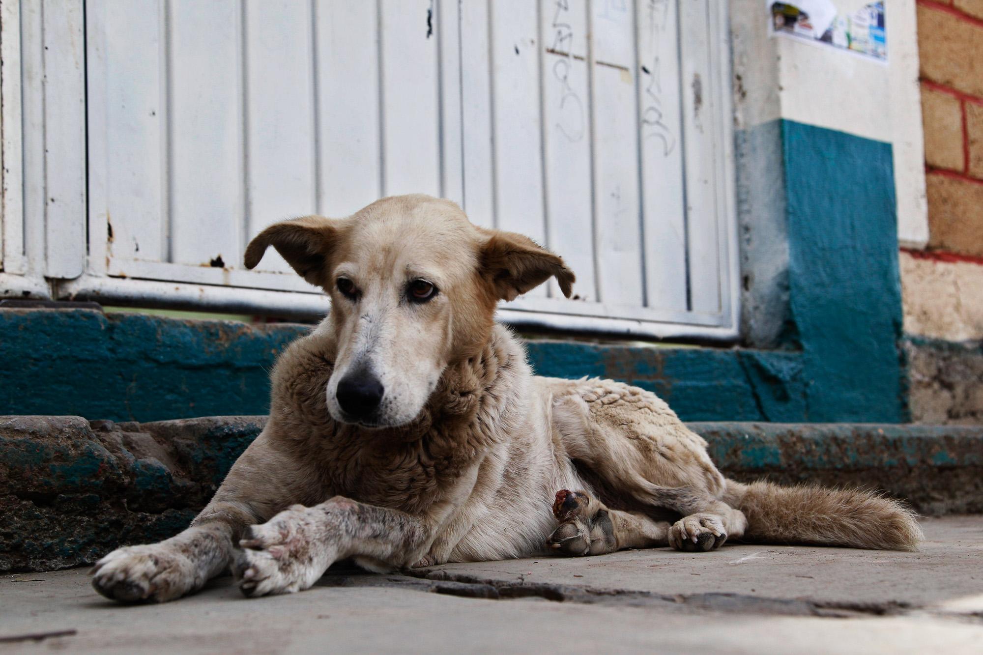За жестокое обращение с животными в Мексике будут сажать на 8 лет