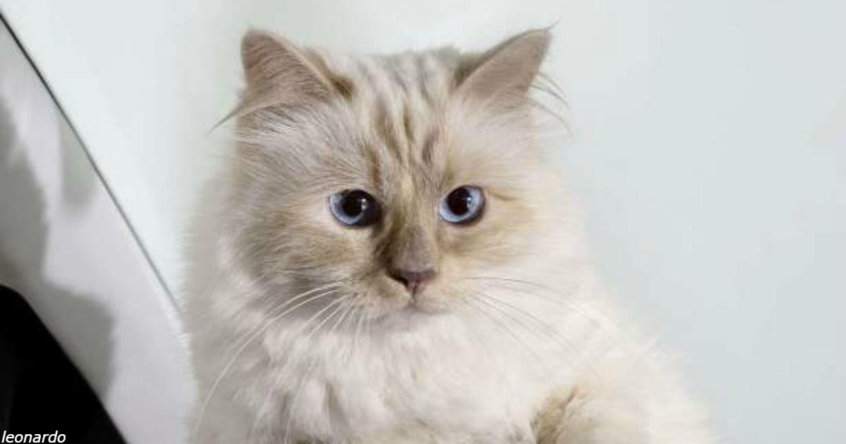 Кошка Карла Лагерфельда получила в наследство 200 долларов миллионов