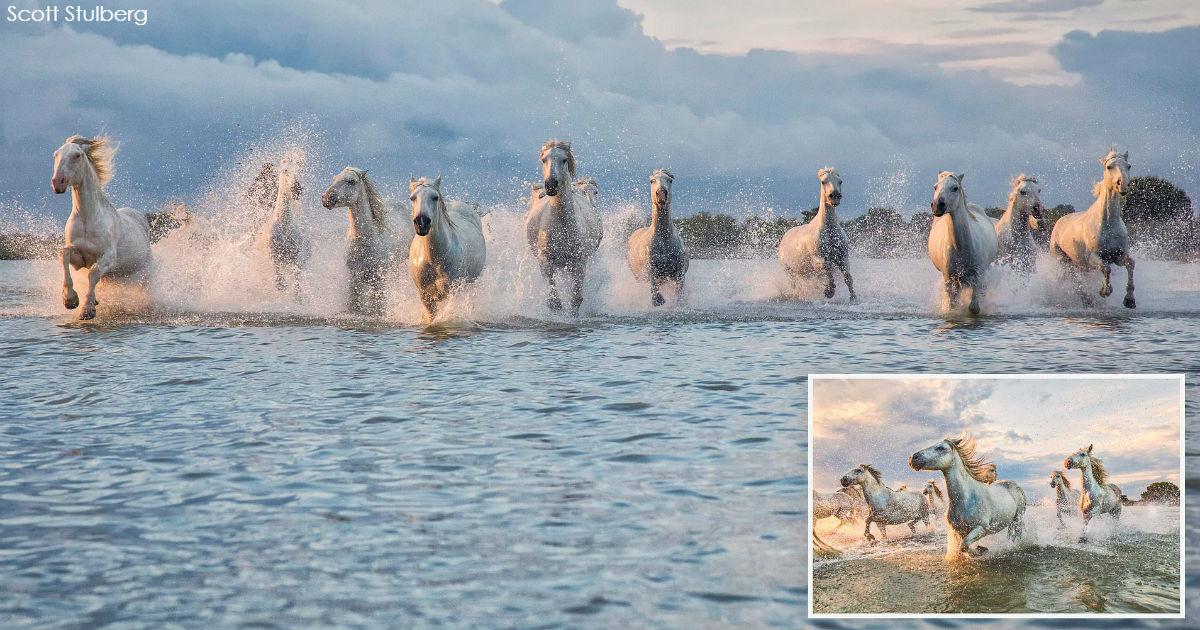 Дикие лошади, скачущие по озеру на юге Франции, попали на фото