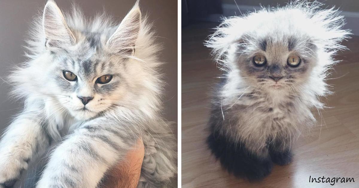 8 пород кошек для тех, у кого их никогда не было