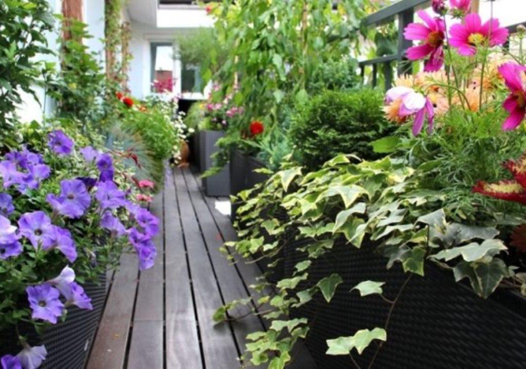 Как сделать сад для цветов, зелени или овощей на балконе