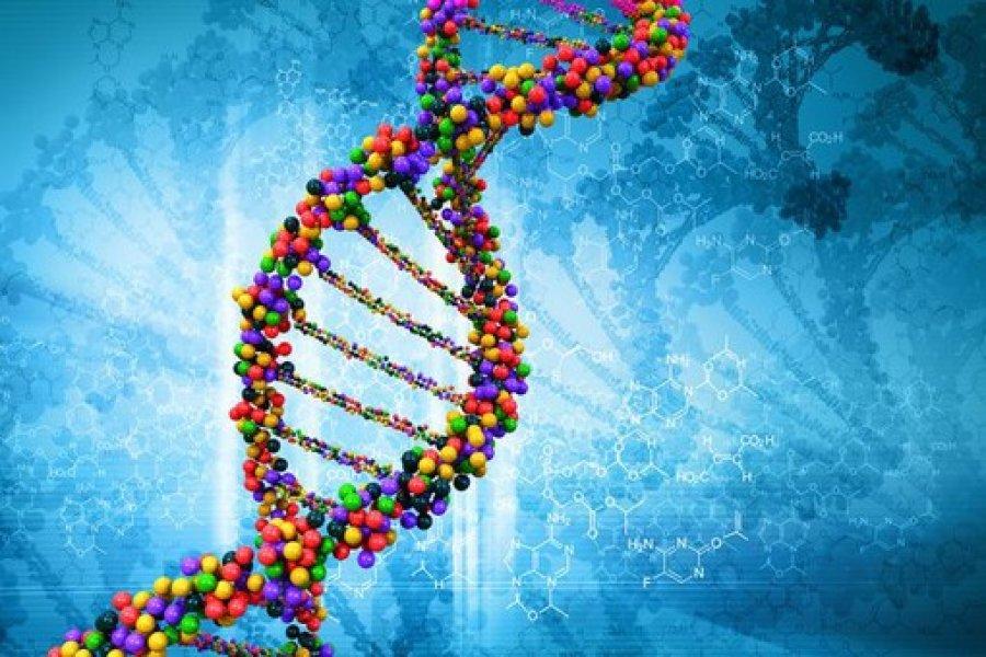 Удивительные открытия, которые можно сделать с помощью теста ДНК