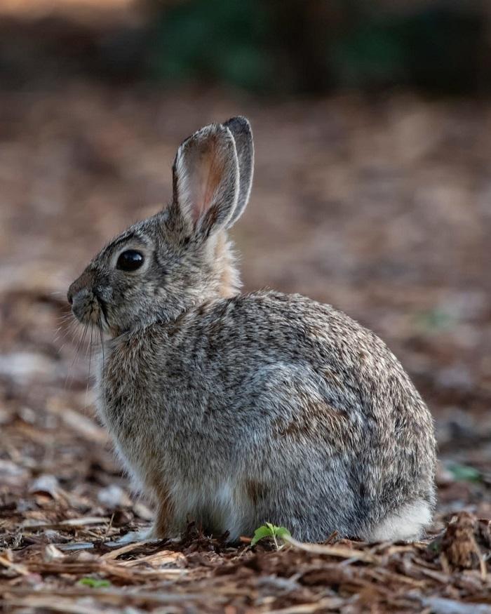 Семейная пара была без ума от кроликов и всего, что с ними связано. В результате они создали причудливый музей