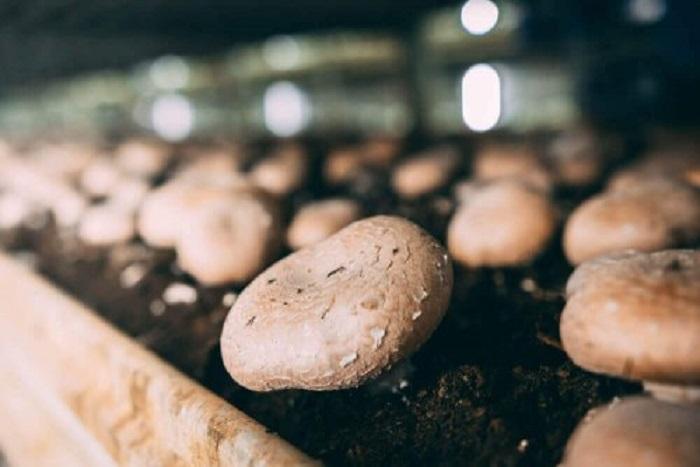 Любители грибов могут легко выращивать их дома, достаточно следовать всего нескольким советам
