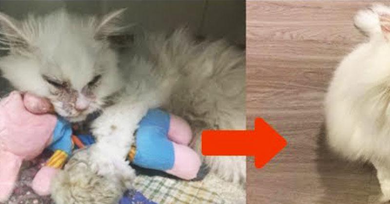 Приют отговаривал ее брать умирающего кота. Через 5 дней его не узнать!