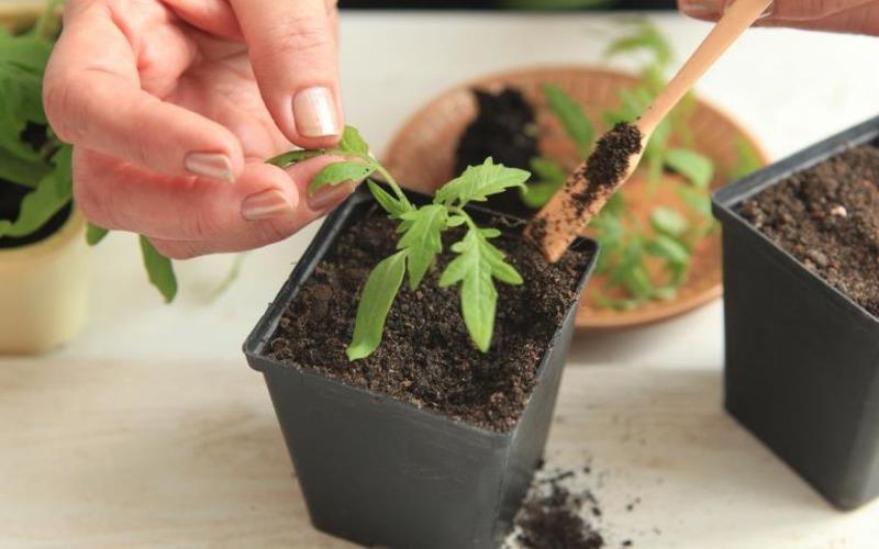 Чего не хватает растениям: чем и когда удобрять, чтобы получить хороший урожай