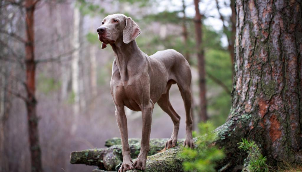 Гениальное решение: чтобы собака не тревожилась, оставаясь дома одна, женщина оставила для нее манекен