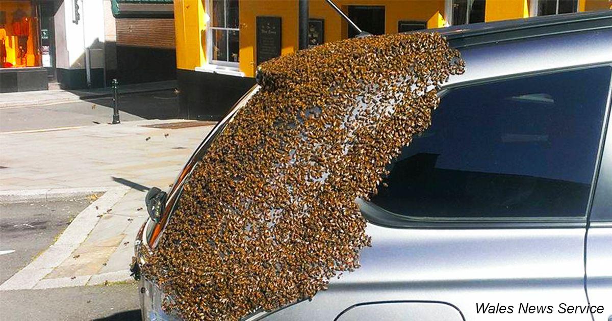 Пчелиная семья два дня преследовала авто, где застряла их матка
