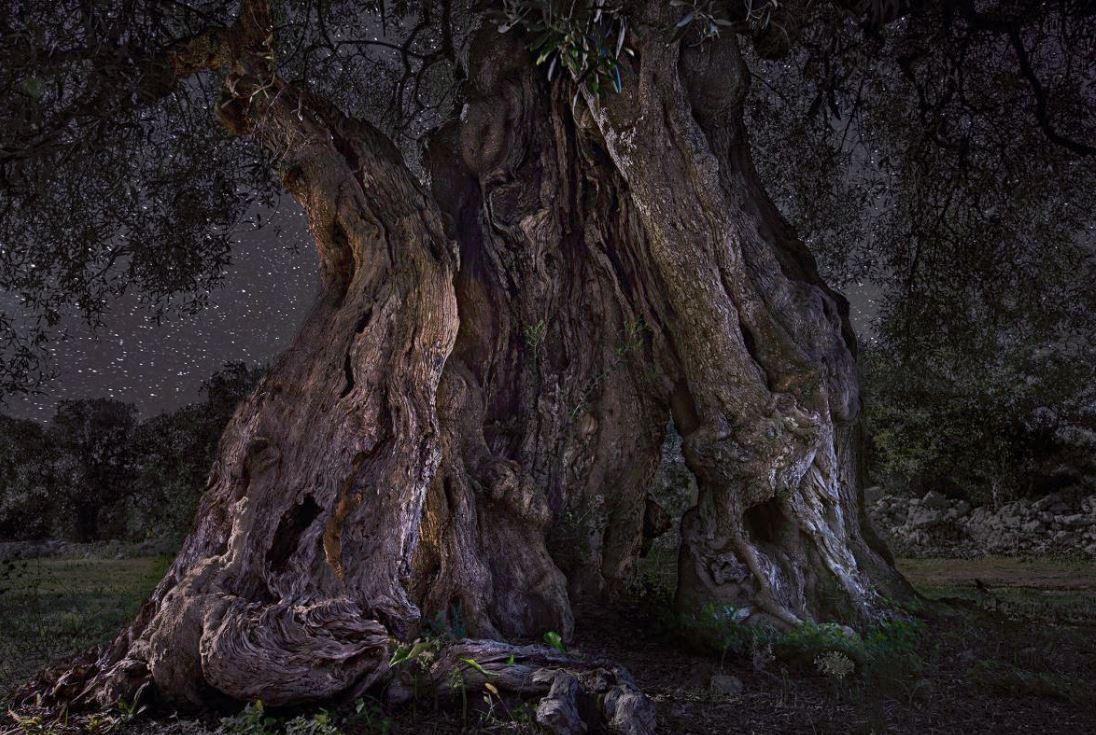 11 волшебных фото самых старых деревьев на фоне звёздного неба