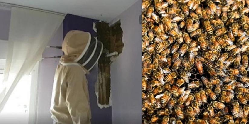 Супруги 2 года не могли понять, чем шумят их соседи. Когда они прислушались к стене, стало ясно, что это пчелы