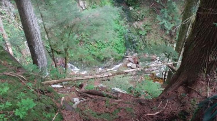 Мужчине, заблудившемуся в лесу с дочерью и сыном, пришлось оставить детей одних, чтобы их спасти