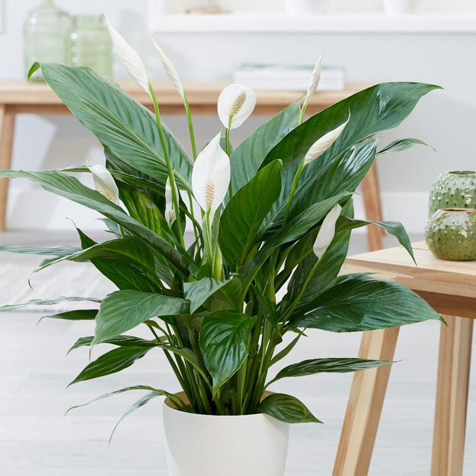 10 растений, которые создают идеальный микроклимат в домашних условиях
