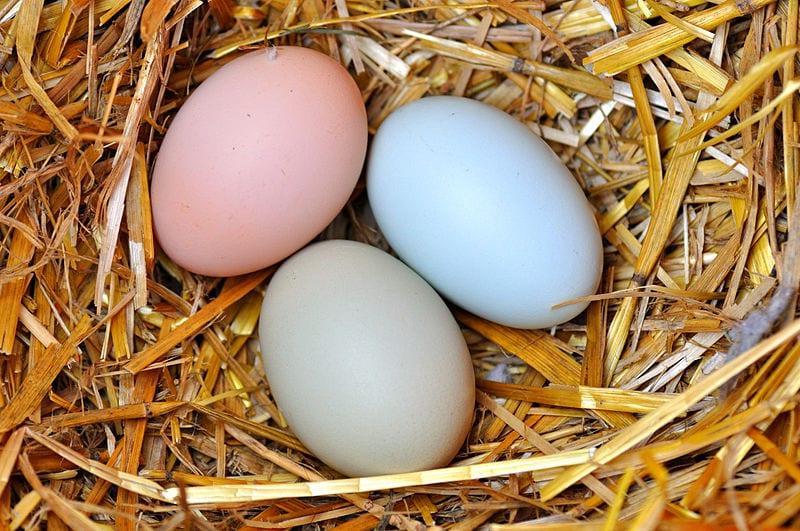 Реабилитированы: мифы о яйцах, в которые нельзя верить