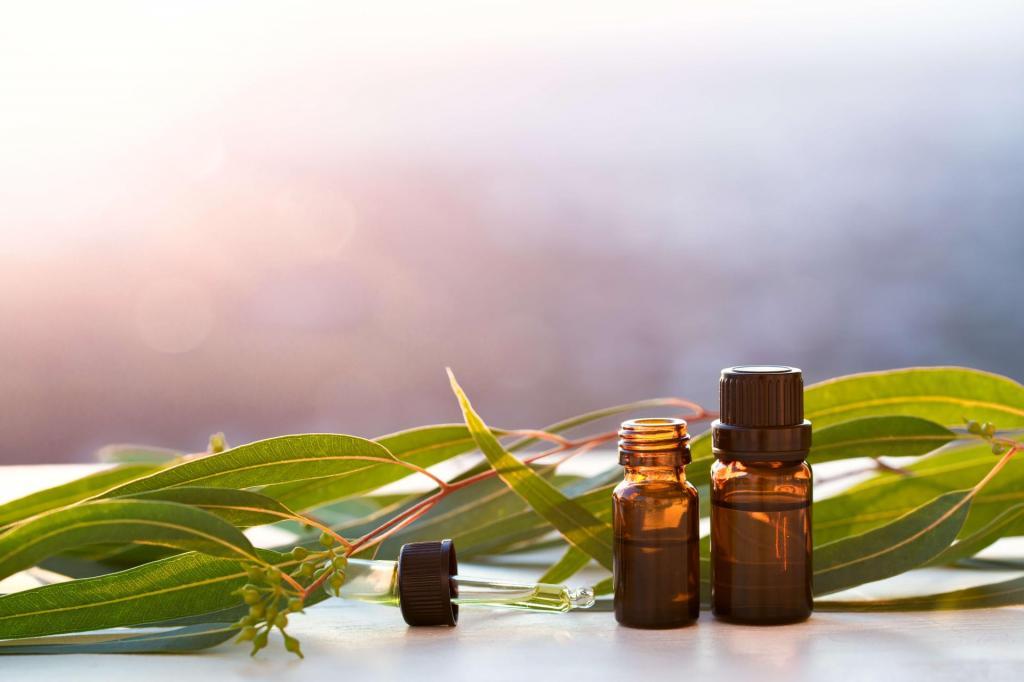 Освежает, защищает кожу и еще некоторые полезные свойства эвкалиптового масла
