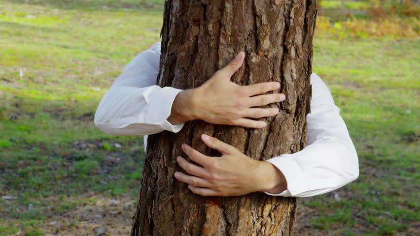 Вот что дерево вашего рождения рассказывает о вашей личности