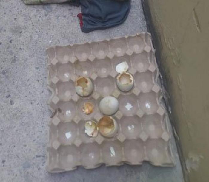 Женщина купила два десятка утиных яиц для еды. Нежданная жара распорядилась по-своему