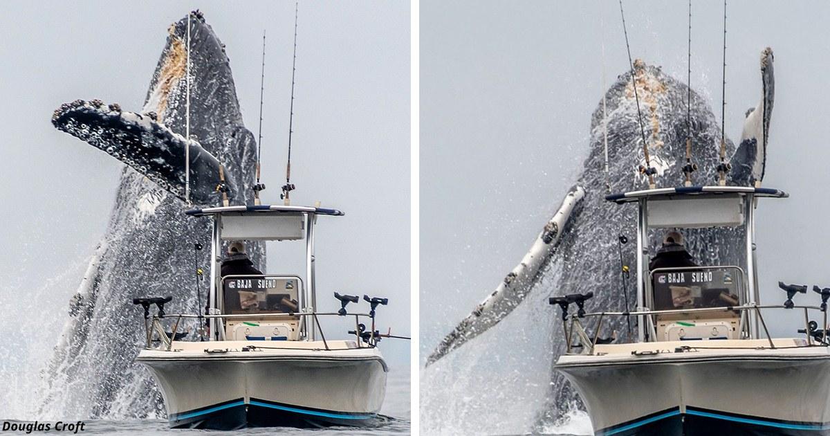 Гигантский кит, который чуть не утопил рыбака, попал на видео