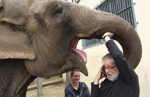 Мужчина нашёл слона, за которым ухаживал 32 года назад, — и слон его узнал