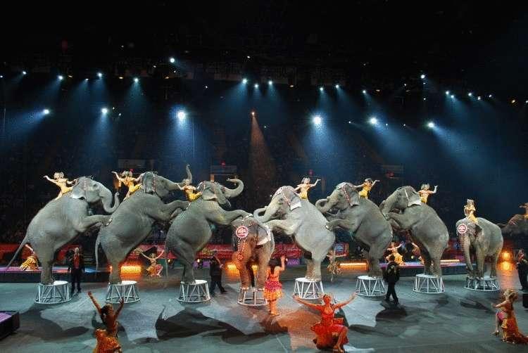 Словакия — еще одна европейская страна, где запретили цирк с животными