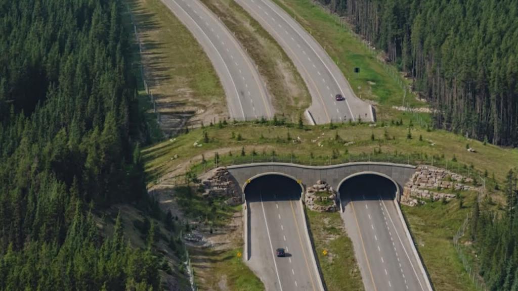 Забота о братьях наших меньших: мосты для животных помогают решить проблемы с экологией