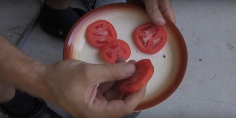 Легко и быстро вырастить помидоры можно с помощью ведра компоста и четырех ломтиков помидоров (полезный лайфхак)