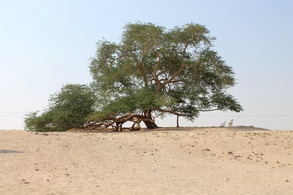 10 уникальных деревьев со всей планеты