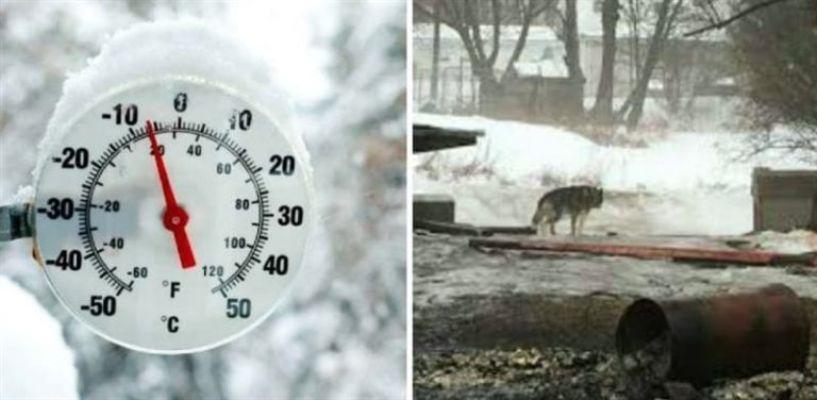 Хаски много лет просидел на цепи на улице, пока счастливая случайность не изменила его собачью жизнь