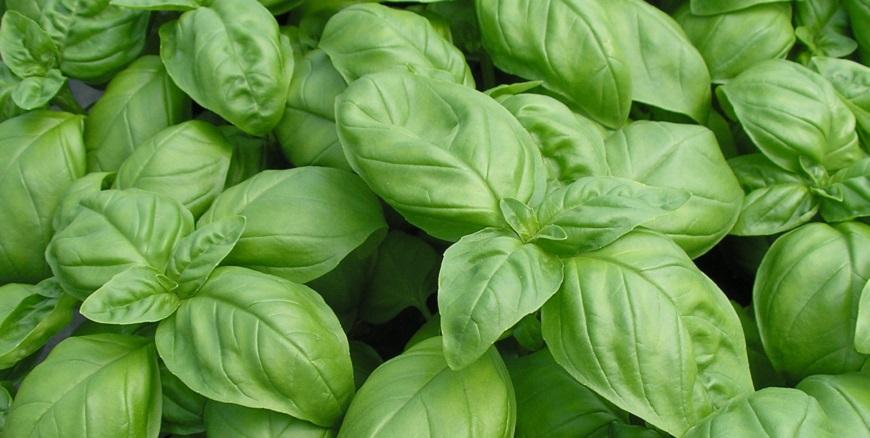 Пять растений, привлекающих любовь