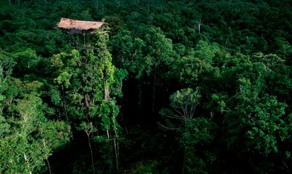 Робинзоны-древолазы: истории людей, устроивших себе дома на деревьях