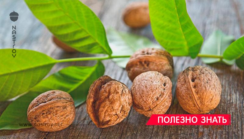В борьбе с болезнями приведут к успеху листья грецкого ореха! В мае и июне собираем и здоровье укрепляем