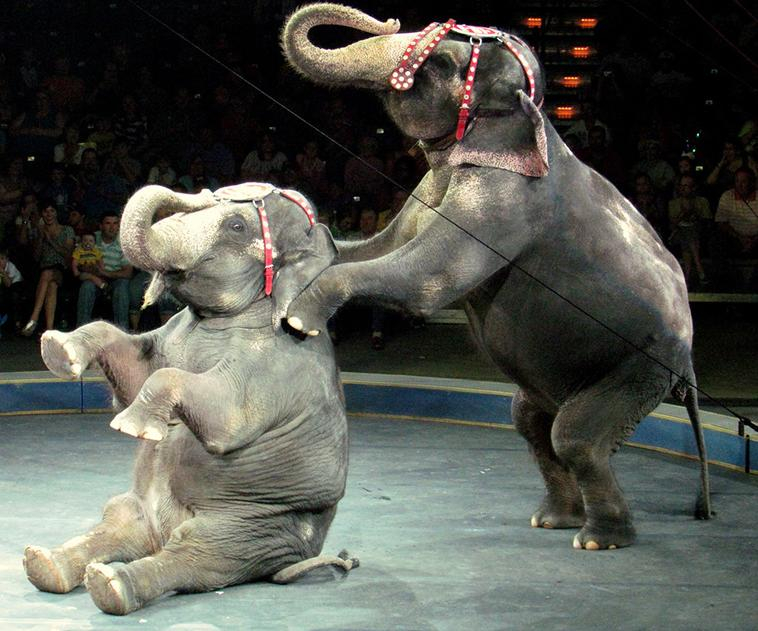 Голограммы вместо животных: немецкий цирк пытается остановить жестокое обращение с животными