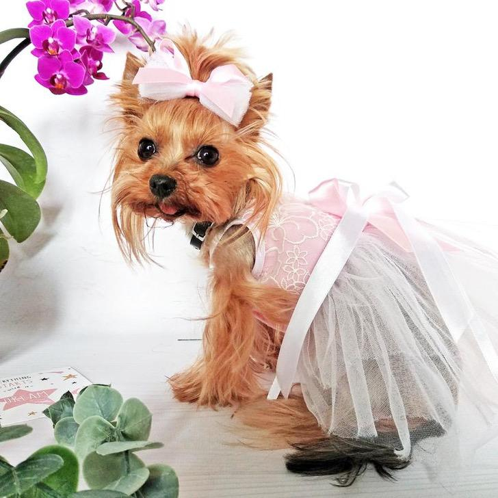 В столь важный день даже ваша собака хочет быть на высоте: милые платья подружек невесты для собак
