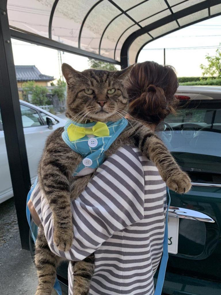 Веселая, подборка приколов котики