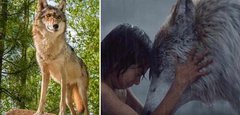 Большая серая собака  подошла ко мне и легла рядом, согревая теплом своего тела: ребенок рассказал о ночи в лесу