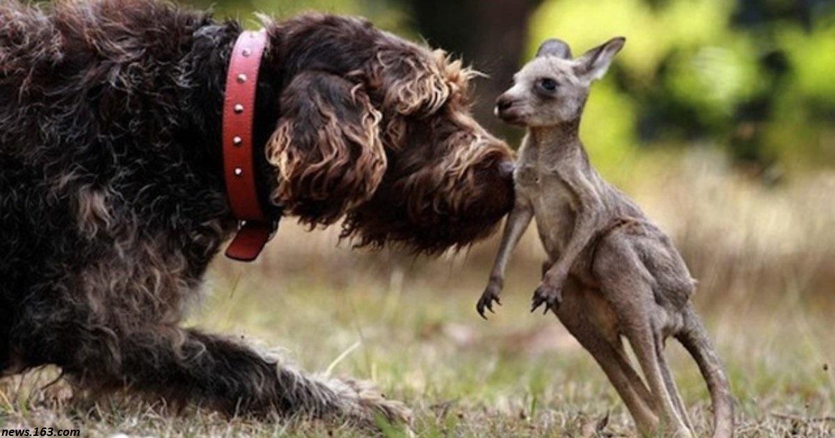6 потрясающих случаев, когда животные спасали других животных