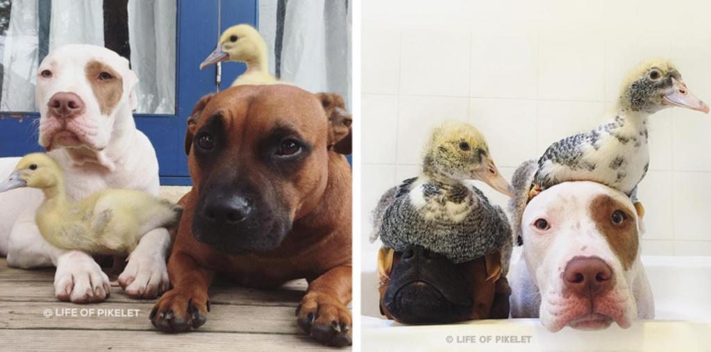 Нам стоит у них поучиться: 10 примеров необычной дружбы животных