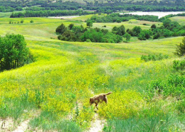 Собака, которая не смогла искать контрабанду, получила новую, интересную работу