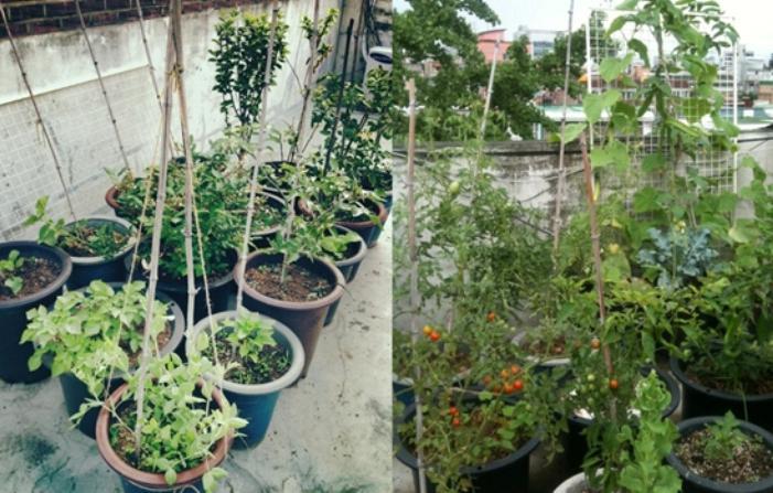 Свежие овощи все лето: собственный огород в плотно заселенном городе на крыше или балконе