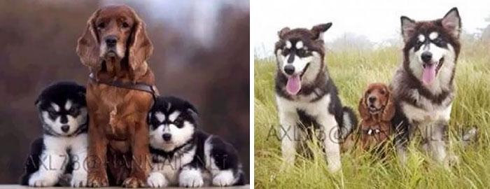 25 фотографий, как животные росли вместе: ДО и ПОСЛЕ