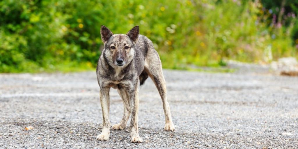 Собака друг человека, но почему животные нападают на людей? Мнение экспертов