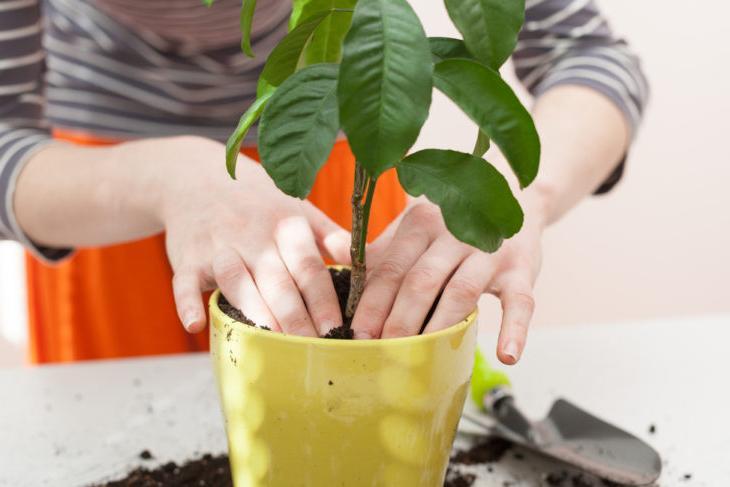 Простая инструкция по выбору комнатных растений, подходящих вашему дому