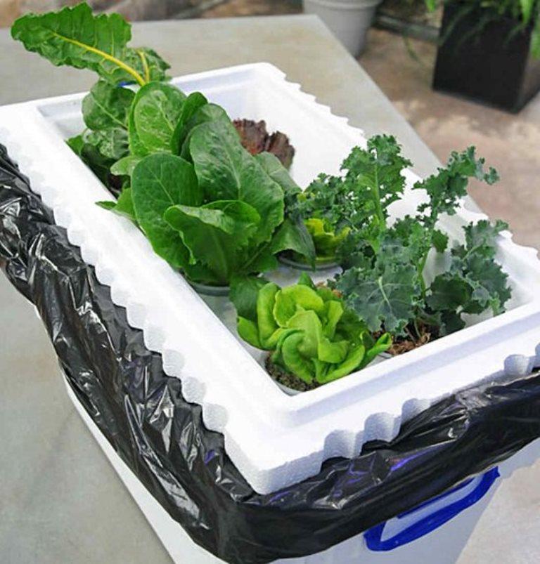 Как вырастить растения без земли: домашние гидропонные системы своими руками