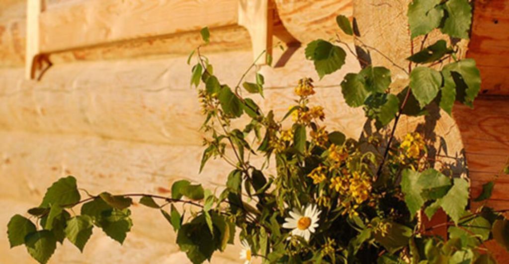 Сохранить или выбросить? Что делать после Троицы с ветками и полевыми цветами, которыми украшали дом