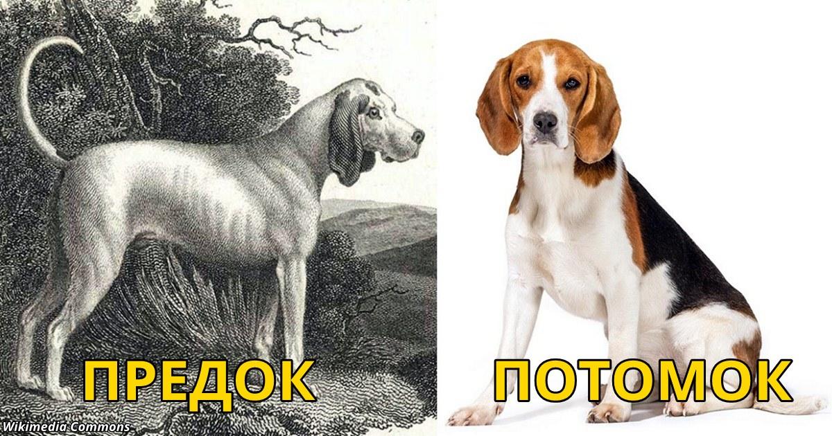 15 вымерших пород собак, о которых вы и не слышали