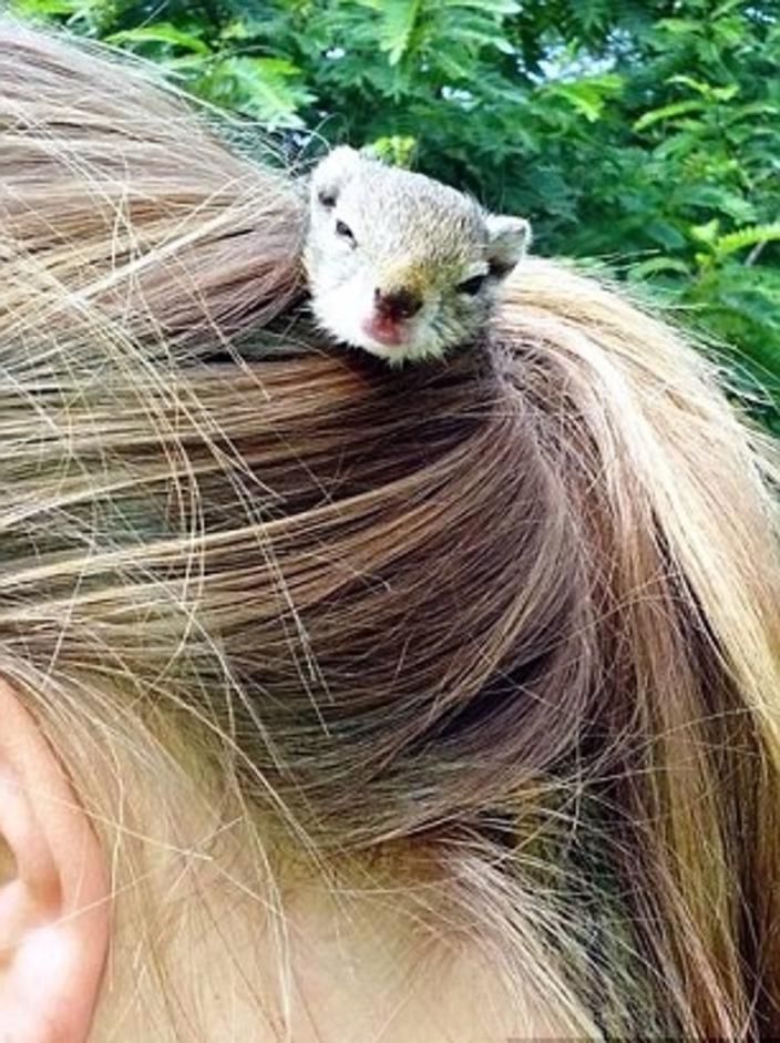 16-летняя девушка спасла белку, и теперь зверек живет у нее в волосах: фото