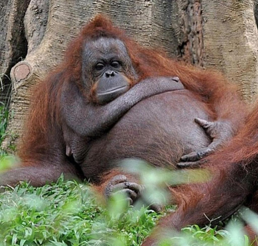 Открытки, беременные животные прикольные картинки