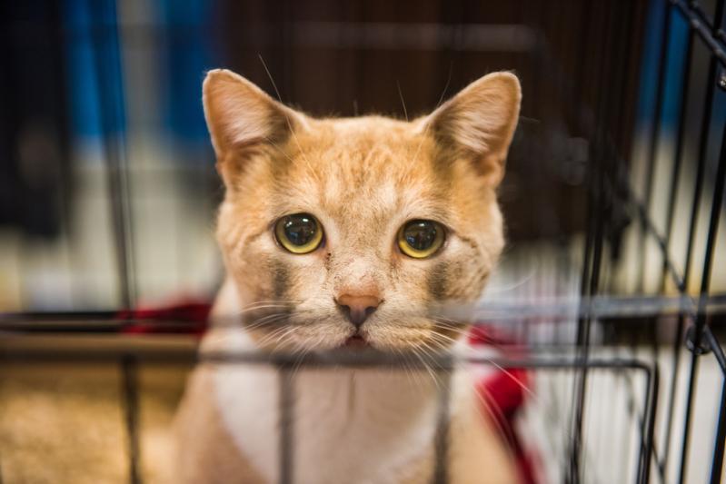 Мы в ответе за тех, кого приручили: 5 ошибок, которые допускают владельцы кошек