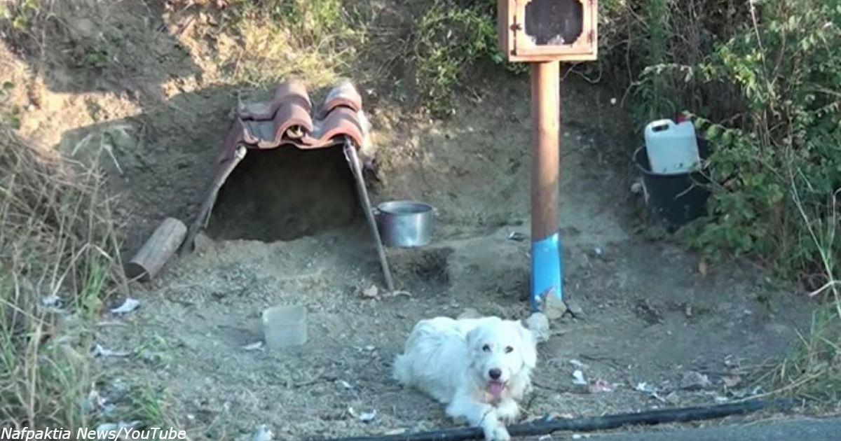 Греческий «Хатико» 18 месяцев ждёт владельца, погибшего в автокатастрофе