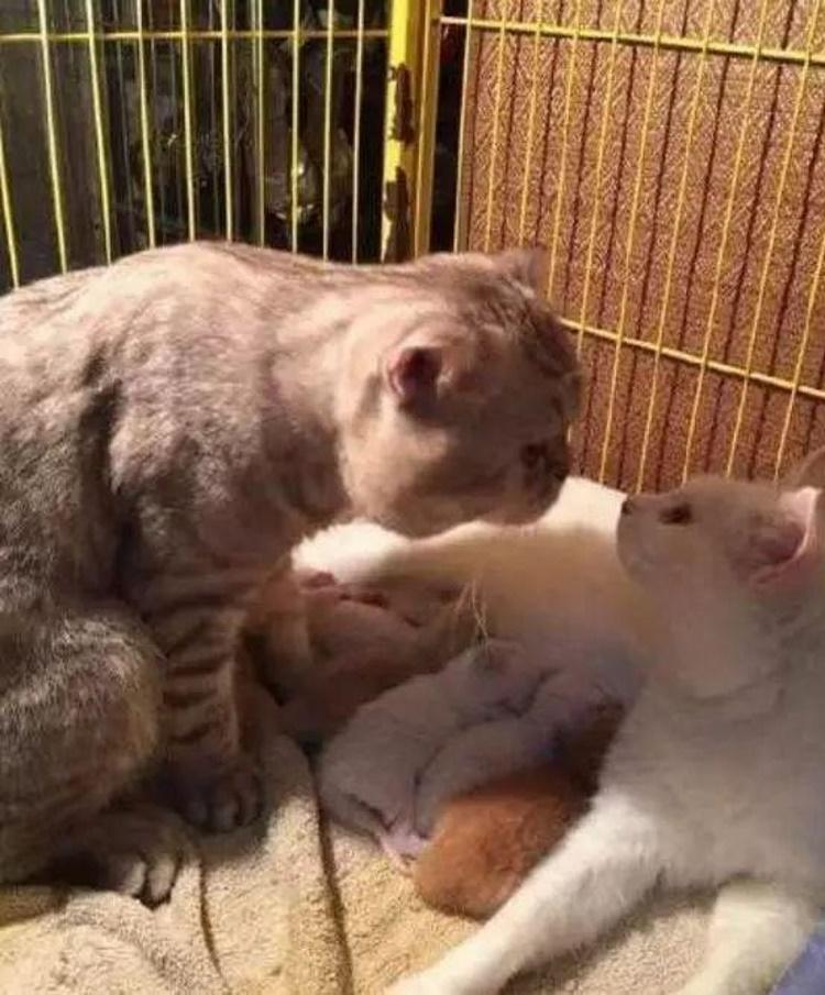 Кошка родила котят. Отец семейства трогательно поблагодарил любимую: фото
